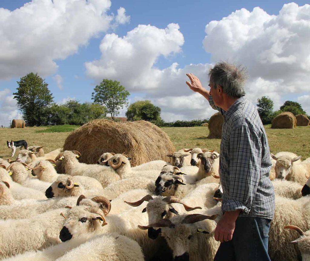 La Ferme du Chêne - Gilles Michaudel - Viande d'agneau et produits dérivés de la pomme bio (cidres, vinaigres, gelées, jus de pomme)